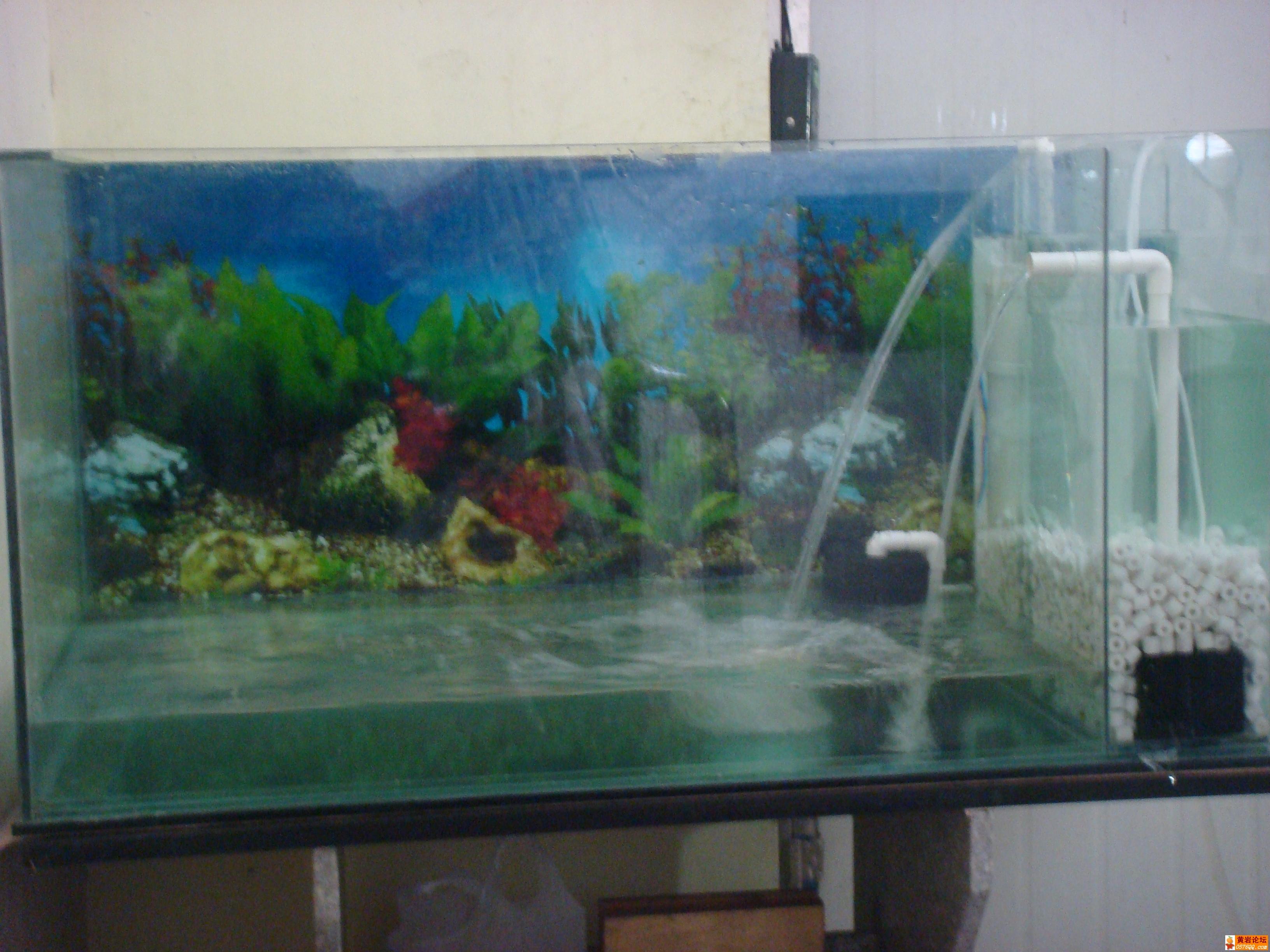 自制玻璃鱼缸带过滤 超牛,免换水